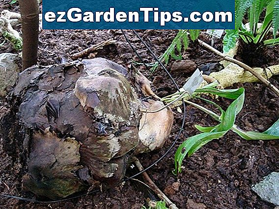 Root Rot Cure