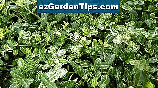 Fall Ground Cover Plants