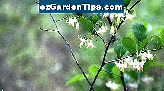 Native Plants of Mississippi
