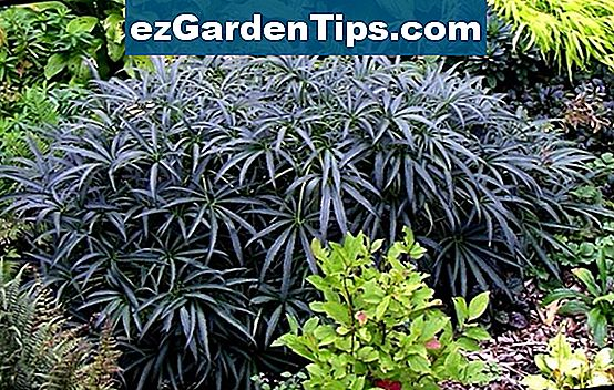 Hardy Shrubs for Shade