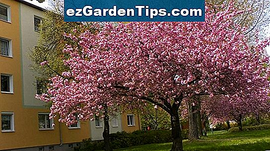 Welche Blumen Blühen Im März April Tipps Gärtner De