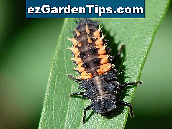 Black & Orange Garden Pests