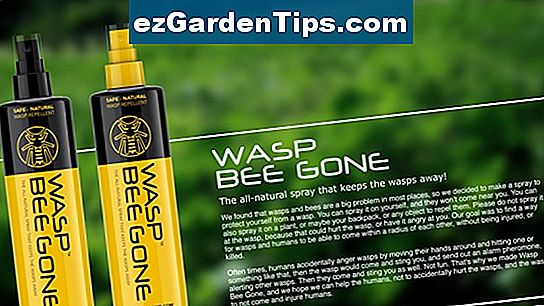 Home Wasp Repellent