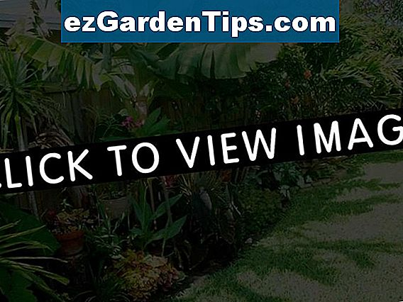 California Tropical Landscape Plants