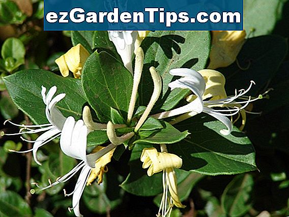 Good Shrubs for Shade