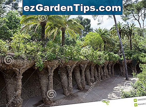 Outdoor Tropical Plants w Kalifornii