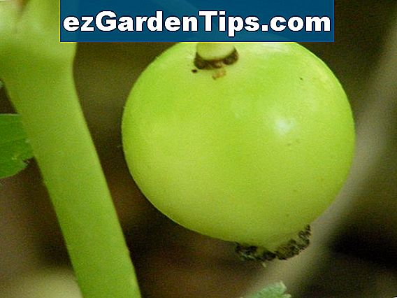 Apple tree asexual reproduction pictures